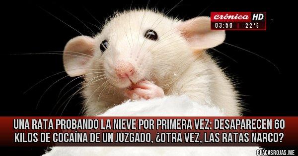 Placas Rojas - Una rata probando la nieve por primera vez: Desaparecen 60 kilos de cocaína de un juzgado, ¿otra vez, las ratas narco?