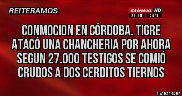 Placas Rojas - conmocion en córdoba. TIGRE ATACÓ UNA CHANCHERIA POR AHORA SEGUN 27.000 TESTIGOS SE COMIÓ CRUDOS A DOS CERDITOS TIERNOS