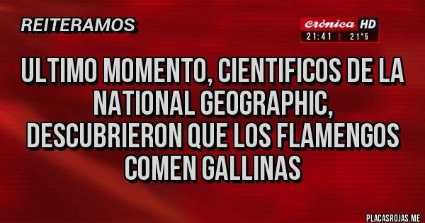 Placas Rojas - ULTIMO MOMENTO, CIENTIFICOS DE LA NATIONAL GEOGRAPHIC, DESCUBRIERON QUE LOS FLAMENGOS COMEN GALLINAS